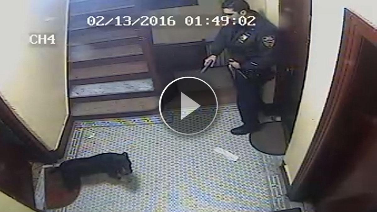 New York, il cane scodinzola al poliziotto per fargli le feste e lui gli spara in testa! VIDEO SHOCK!!