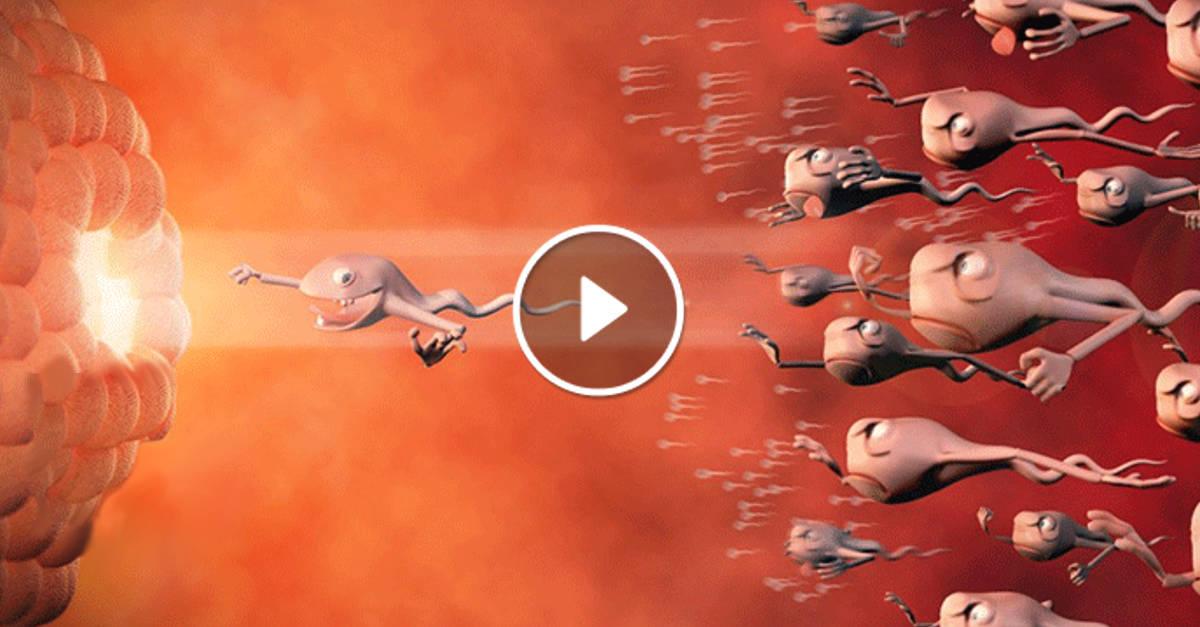 9 Mesi di gravidanza in 4 minuti: rimarrai colpito guardando questo fantastico video… WOW!