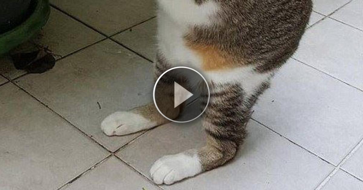 Trova un gatto in un vicolo pensando che fosse normale, poi scopre l'incredibile verità!!!