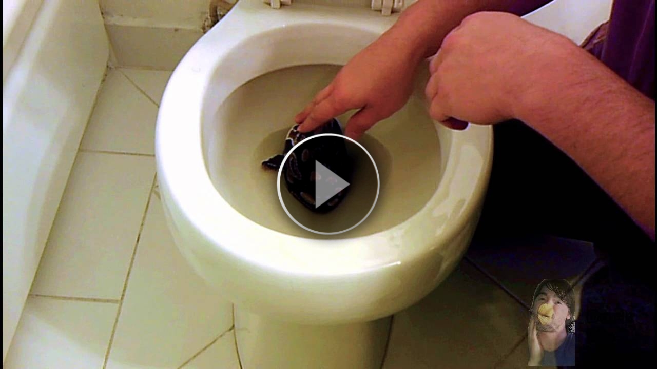 Trova qualcosa di incredibile all'interno del bagno!!