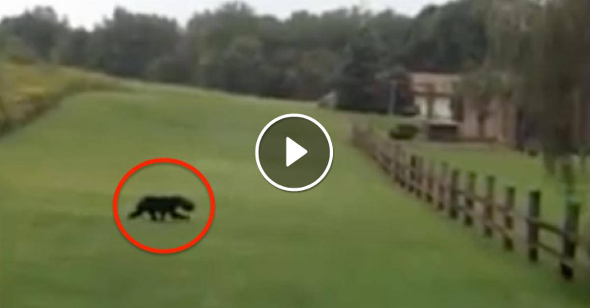 Questa coppia stava fuggendo da un animale selvatico, ma poi ha notato qualcosa di strano sulla sua testa. INCREDIBILE!
