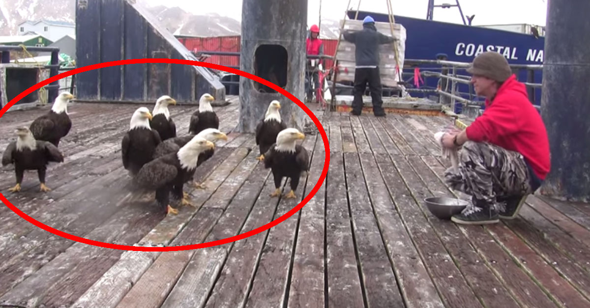 Pescatore dà da mangiare a delle aquile, ma la scena che viene ripresa dalle telecamere è inquietante!!!