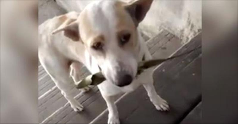 Un cane randagio porta regalini per ringraziare la donna che si occupa di lui e di sua madre!