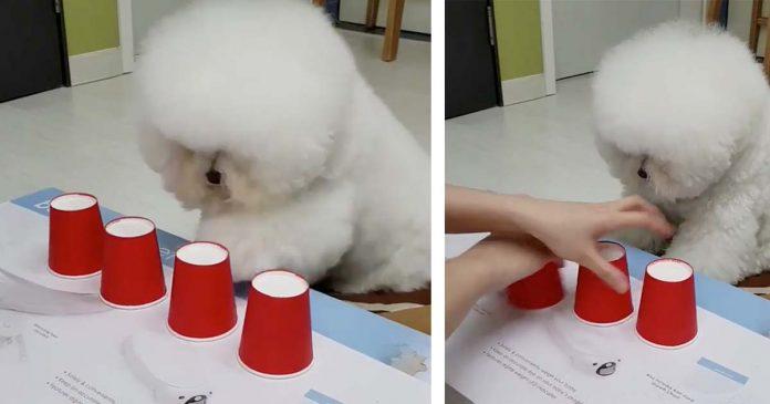 Il cane più intelligente di internet lascia tutti senza parole