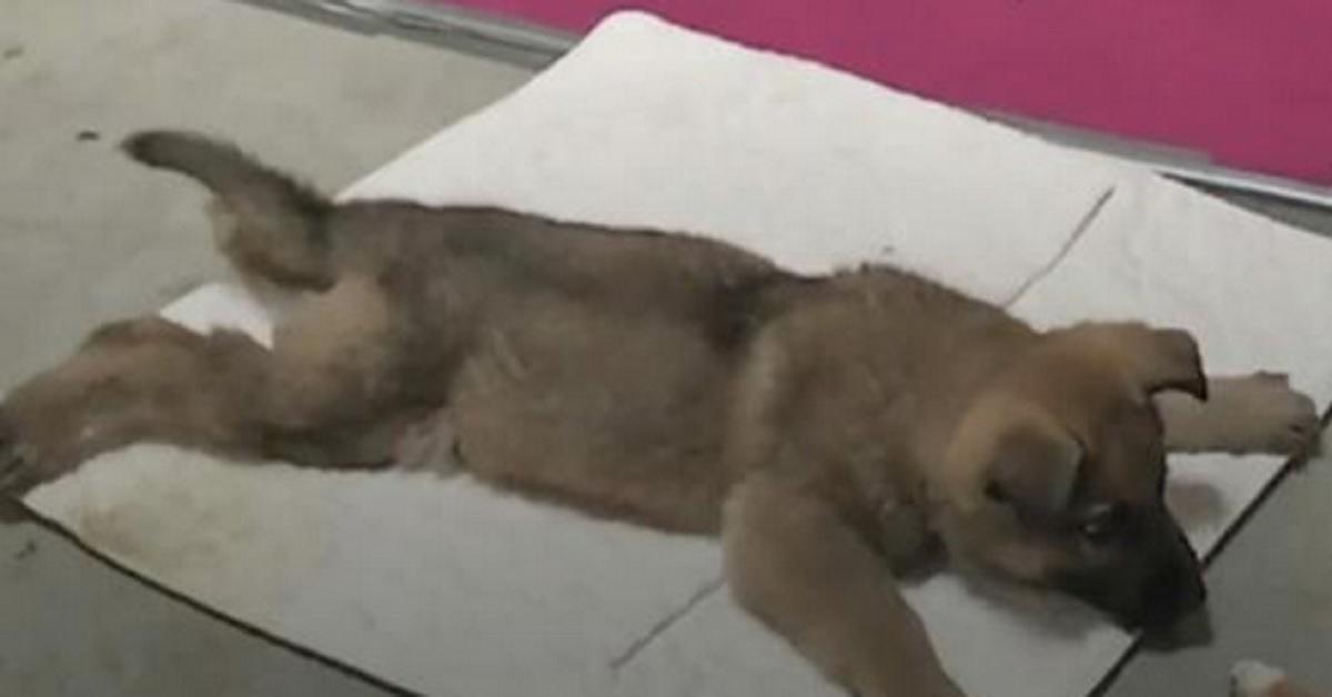 Era stata condannata a morte, il veterinario aveva già preso l'iniezione quando successe l'incredibile!