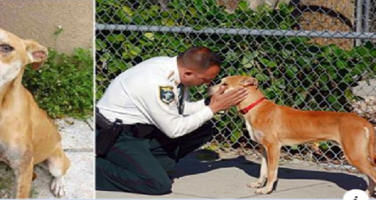 Il poliziotto e il suo nuovo amico: un poliziotto salva un cane e poi lo adotta