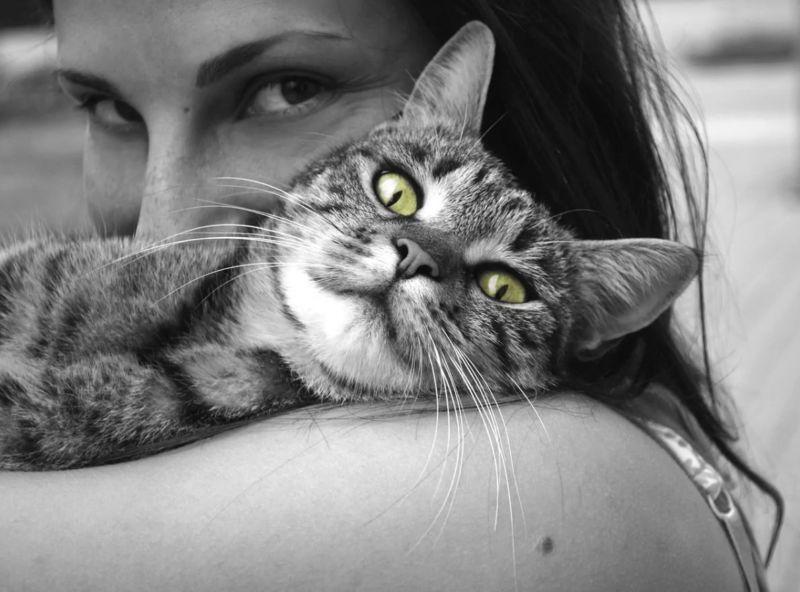 Perché i gatti fanno le fusa? Ecco quello che vogliono dirti